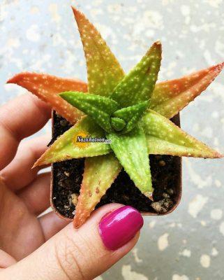 تصاویر گل و گیاه – ۲