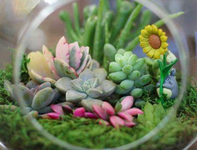 تصاویر گل و گیاه – ۷