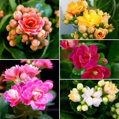 تصاویر گل و گیاه – ۳