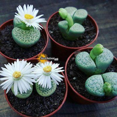 تصاویر گل و گیاه – ۴