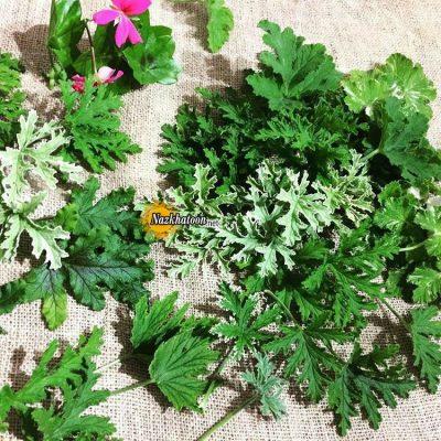 تصاویر گل و گیاه – ۵