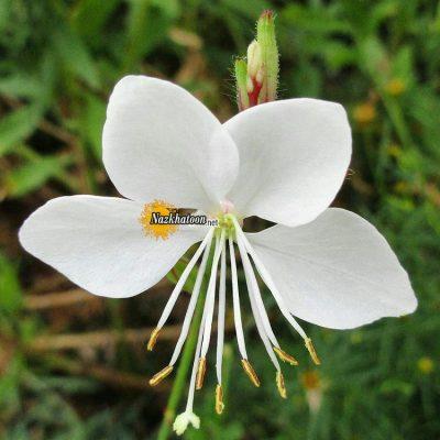 تصاویر گل و گیاه – ۸