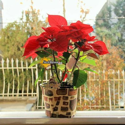 تصاویر گل و گیاه – ۹