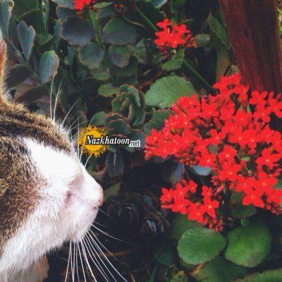 تصاویر گل و گیاه – ۱۰