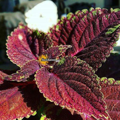 تصاویر گل و گیاه – ۱۲