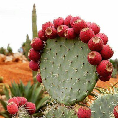 تصاویر گل و گیاه – ۱۳