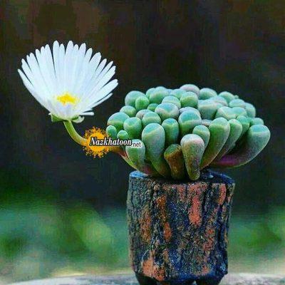 تصاویر گل و گیاه – ۱۷