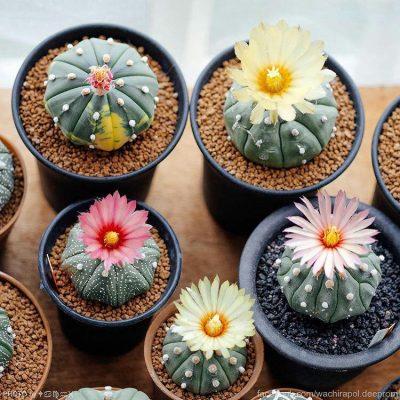 تصاویر گل و گیاه – ۱۶