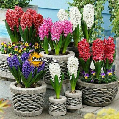 تصاویر گل و گیاه – ۱۹