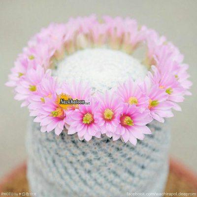 تصاویر گل و گیاه – ۲۳