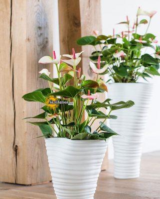 تصاویر گل و گیاه – ۳۳