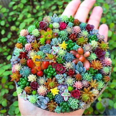 تصاویر گل و گیاه – ۳۱
