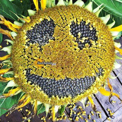 تصاویر گل و گیاه – ۲۹