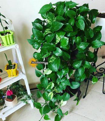 تصاویر گل و گیاه – ۳۰