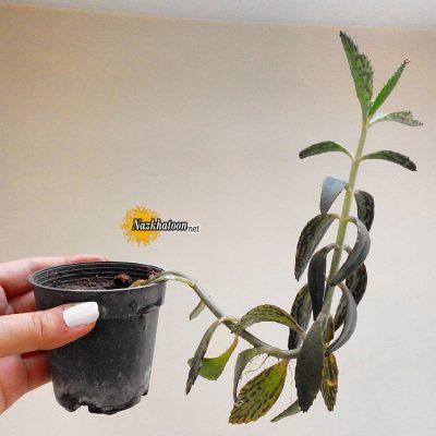 تصاویر گل و گیاه – ۲۸