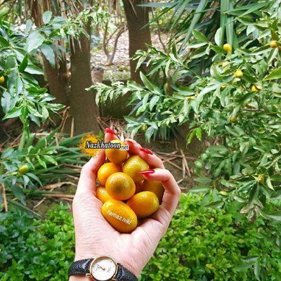 عکس میوه های خوشمزه – ۴