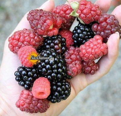 عکس میوه های خوشمزه – ۷