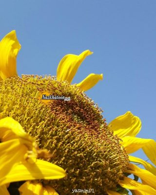 تصاویر گل و گیاه – ۳۴