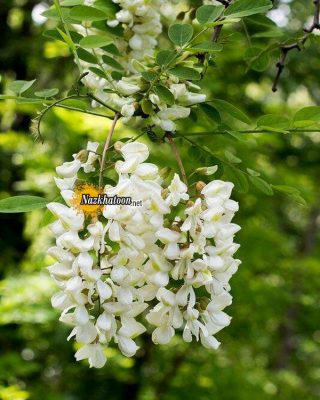تصاویر گل و گیاه – ۳۵