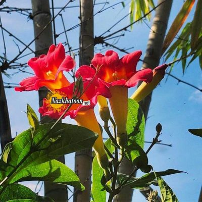 تصاویر گل و گیاه – ۳۶