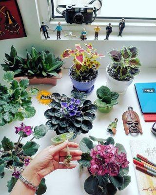 تصاویر گل و گیاه – ۳۷