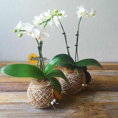 تصاویر گل و گیاه – ۳۸