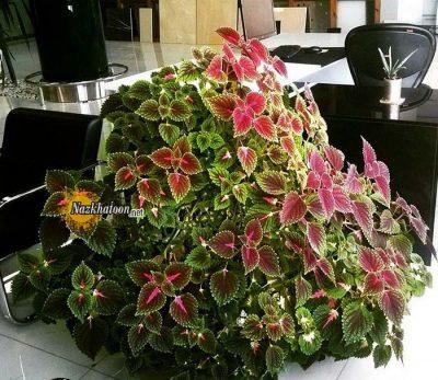 تصاویر گل و گیاه – ۴۳