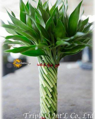 تصاویر گل و گیاه – ۴۸