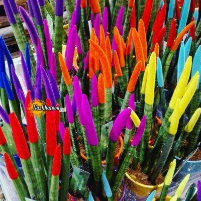 تصاویر گل و گیاه – ۴۶