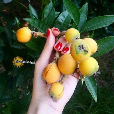 عکس میوه های خوشمزه – ۲۱