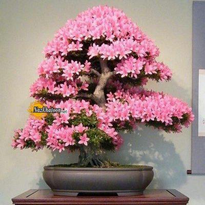 تصاویر گل و گیاه – ۵۰