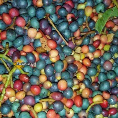 عکس میوه های خوشمزه – ۲۳