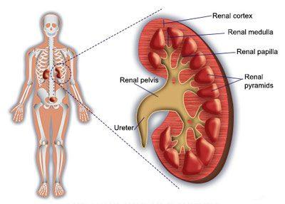 بیماری گلومرولونفریت
