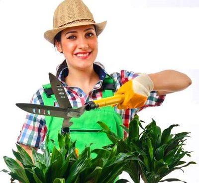 اموزش هرس کردن گیاهان آپارتمانی